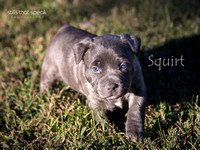 Giving back, Pet Photography, Rescue Photography, Stafford Pet Photographer, Bully Paws Rescue